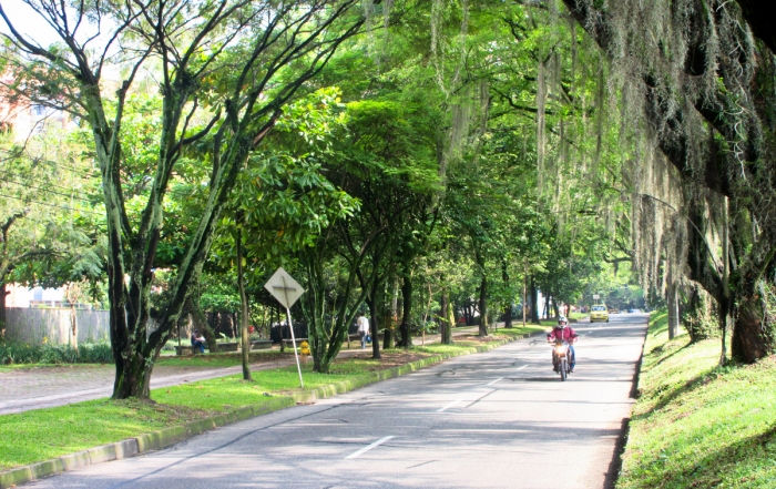 Iron Roamer, Brian Thiessen, walking to Starbucks in Medellin along a tree lined road.